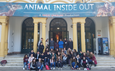 Visita de 1ºB a la exposición Animal Inside Out en el Casino de Sevilla.